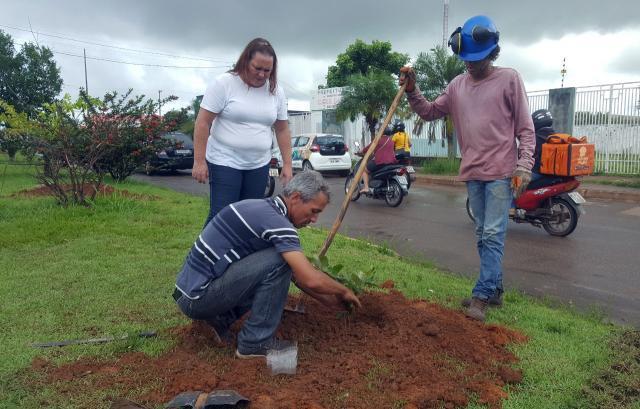 Secretaria de Meio Ambiente arboriza avenidas em Vilhena com mudas de ipê e oiti - Gente de Opinião