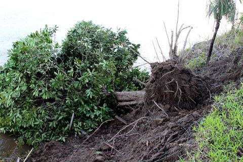 Desbarrancamento no Rio Madeira