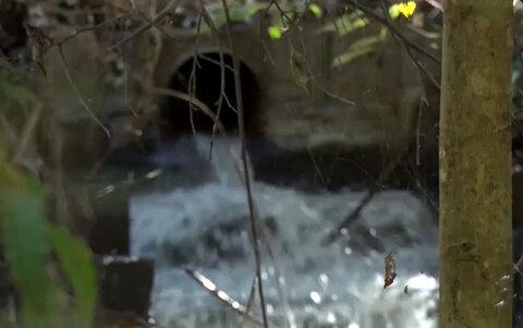 Lixo despejado em córrego causa mortandade de peixes e mau cheiro em Porto Velho