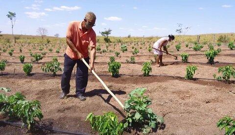 Distribuição de mudas de café clonal incentiva produtores a investir na lavoura em Castanheiras