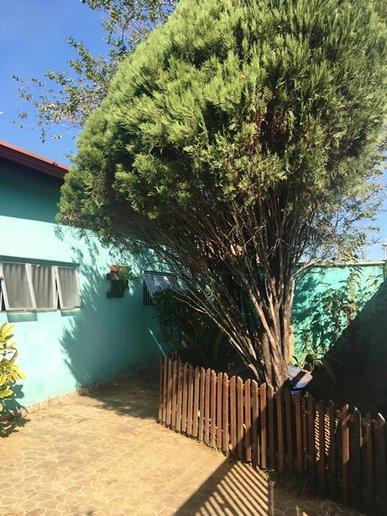 Um pequeno jardim na frente da casa com pinheiro e resedá proporciona sombra