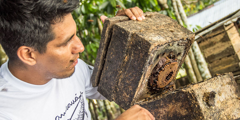 Instituto Mamirauá oferece capacitações em comunidades ribeirinhas. Na foto, o técnico da organização, Jacson Rodrigues (Foto: Aline Fidelix)