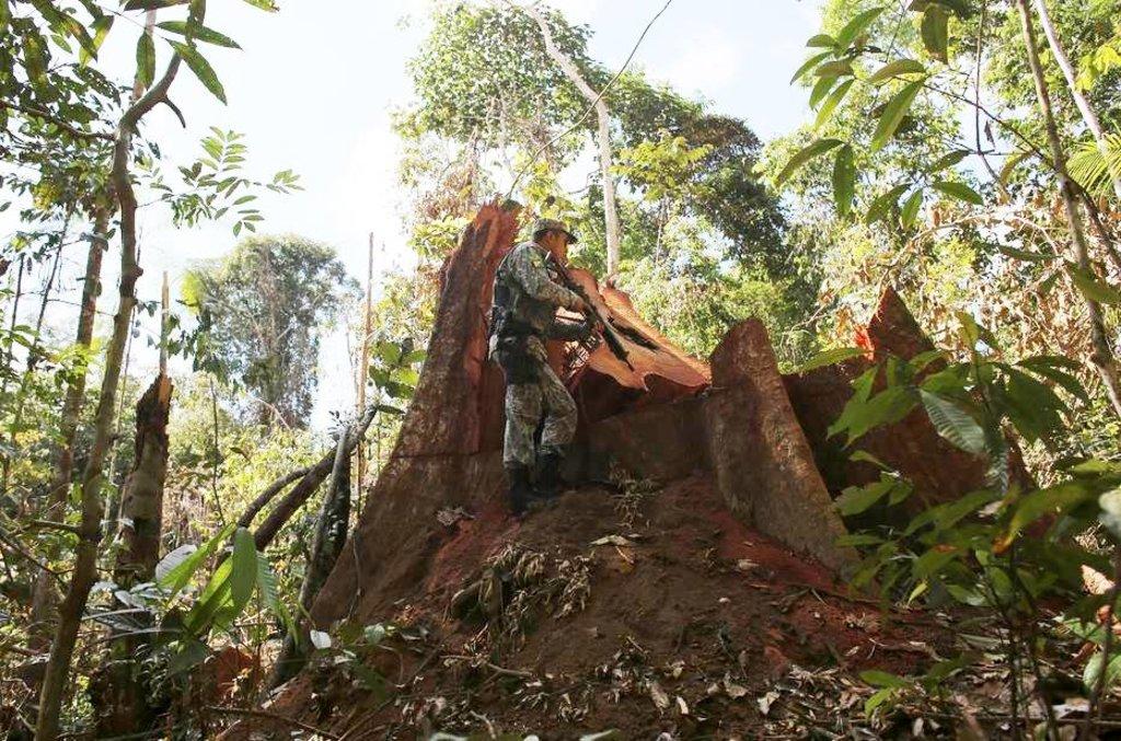Sofre, Amazônia - Por Lúcio Flávio PInto - Gente de Opinião