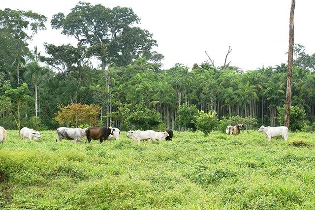 Como fica a Amazônia, Sr. Presidente? - Gente de Opinião