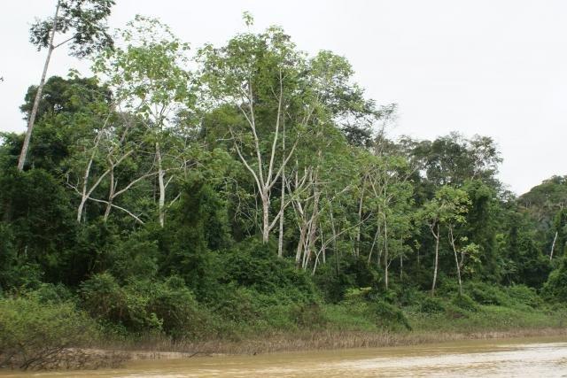 """Áreas prioritárias para conservação ambiental foram """"deletadas"""" do site do Ministério do Meio Ambiente  - Gente de Opinião"""