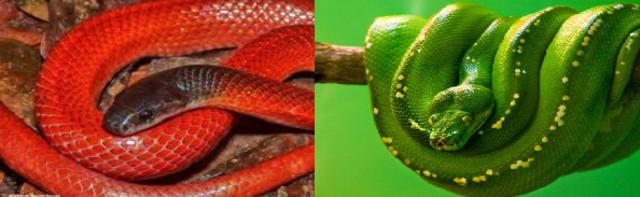A fábula do índio com duas serpentes: Qual deve ser alimentada? - Gente de Opinião