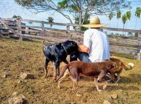 Ji-Paraná vacinará quase 30 mil animais contra raiva em 2019