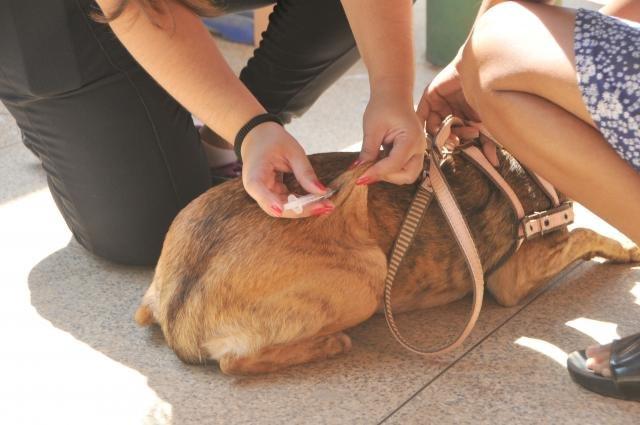 Semusa amplia vacinação de cães e gatos em Porto Velho - Gente de Opinião