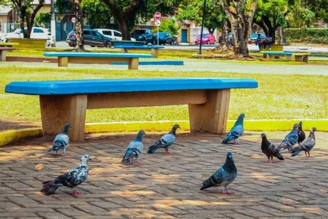 O contato ou a inalação de poeira em ambientes que possuem as fezes dos pombos provoca uma série de doenças graves - Gente de Opinião