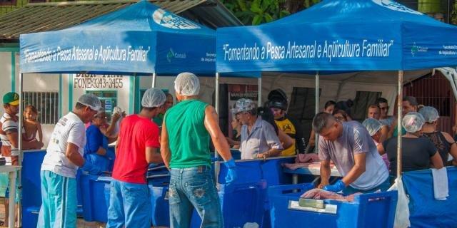 Em Tefé, 15º Feira do Pirarucu Manejado terá 100 peixes à venda neste fim de semana - Gente de Opinião