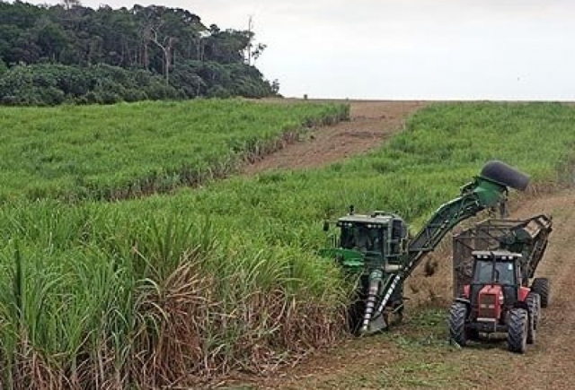 Brasil não reduz emissões, que vão piorar com cana na Amazônia e no Pantanal - Gente de Opinião
