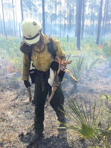 Siga o exemplo deste bom bombeiro - Gente de Opinião