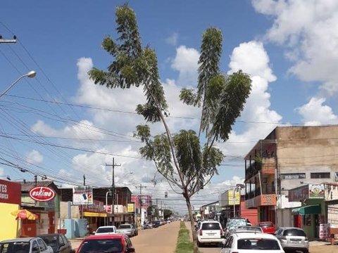 Árvore da felicidade