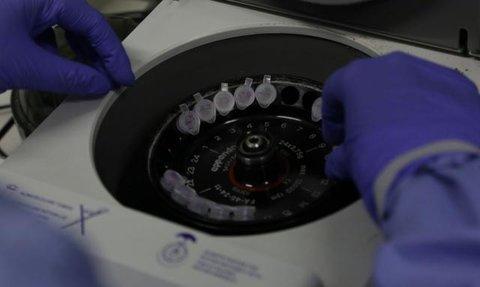 Cientistas britânicos começam a testar vacina contra o coronavírus  em ratos