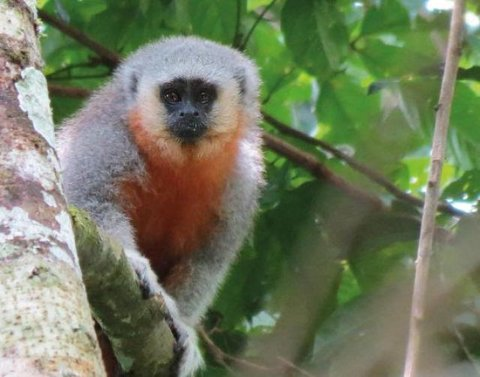 """O Programa """"Tatiana de Carvalho"""" de Pesquisa e Conservação da Biodiversidade da Amazônia tem prazo de inscrição"""