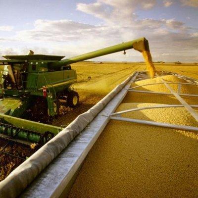 Após o final da colheita de soja, produtores de Rondônia investem no milho 2ª safra