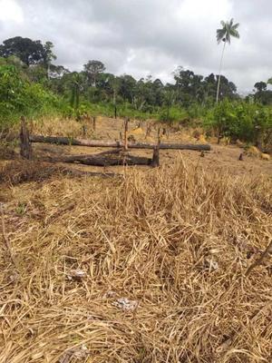 Rondônia: indígenas de aldeia Karipuna denunciam invasão e pedem socorro contra coronavírus
