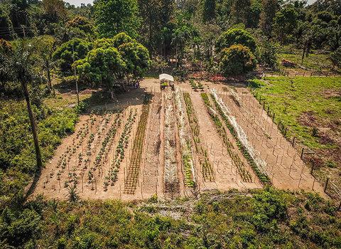 Agrofloresta: você sabe o que é e como se faz?