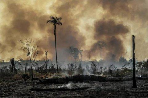 Pandemia não detém o desmatamento. Professores e acadêmicos debatem o tema em videoconferência da Uniron