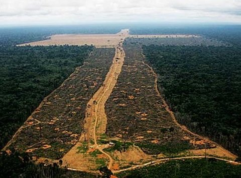 Área desmatada na Amazônia a ser queimada em 2020 pode superar os 4,5 mil km2
