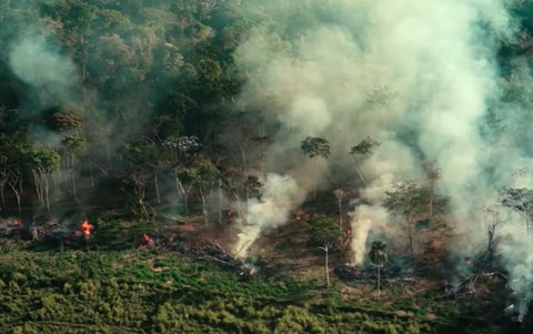 Queimadas podem destruir quase 9 mil quilômetros quadrados na Amazônia