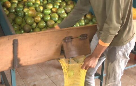 Consultoria financeira on line e gratuita do Sebrae auxilia produtor de laranja