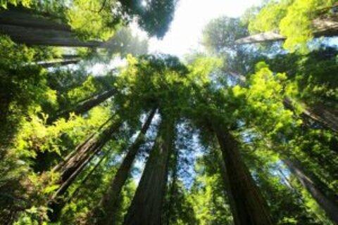 Dia de Proteção às Florestas: áreas de conservação são aliadas no combate ao desmatamento