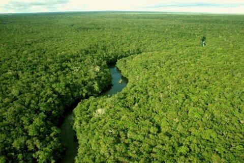 Governo de Rondônia abre consulta pública para auditoria inédita no setor florestal