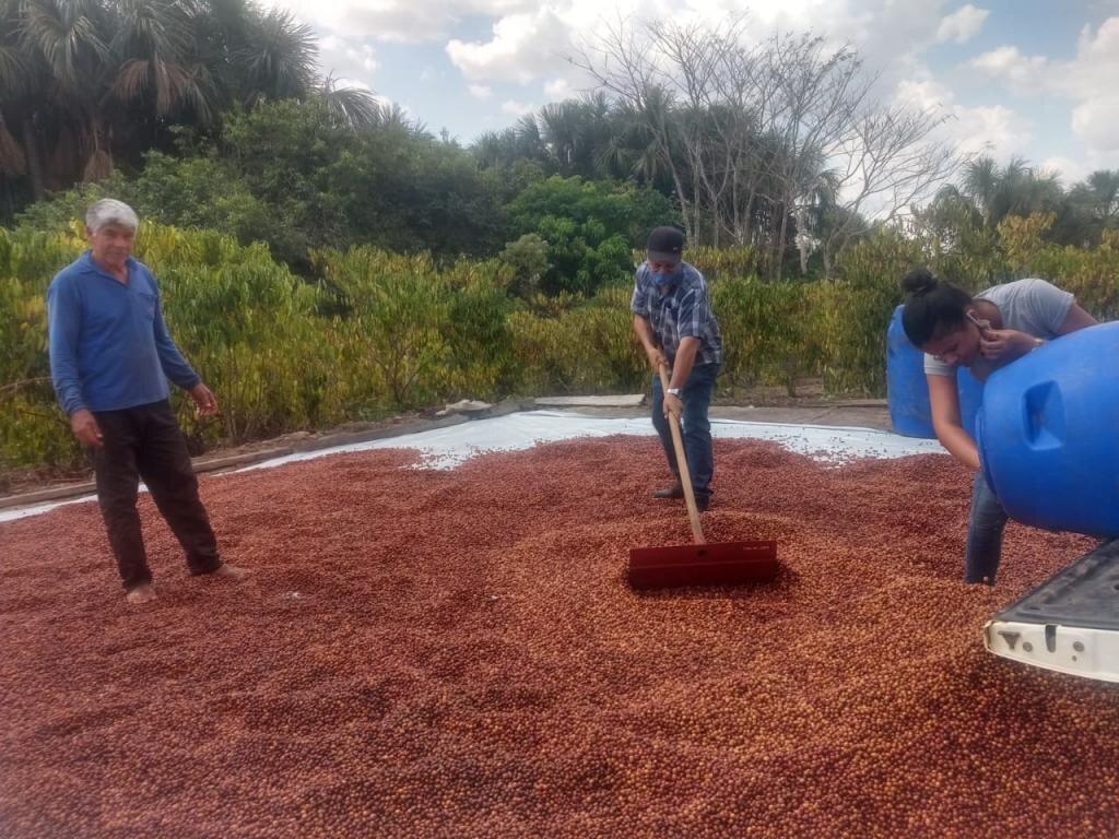 Produtores de Café de Rolim de Moura vão participar de concurso estadual de qualidade do café - Gente de Opinião